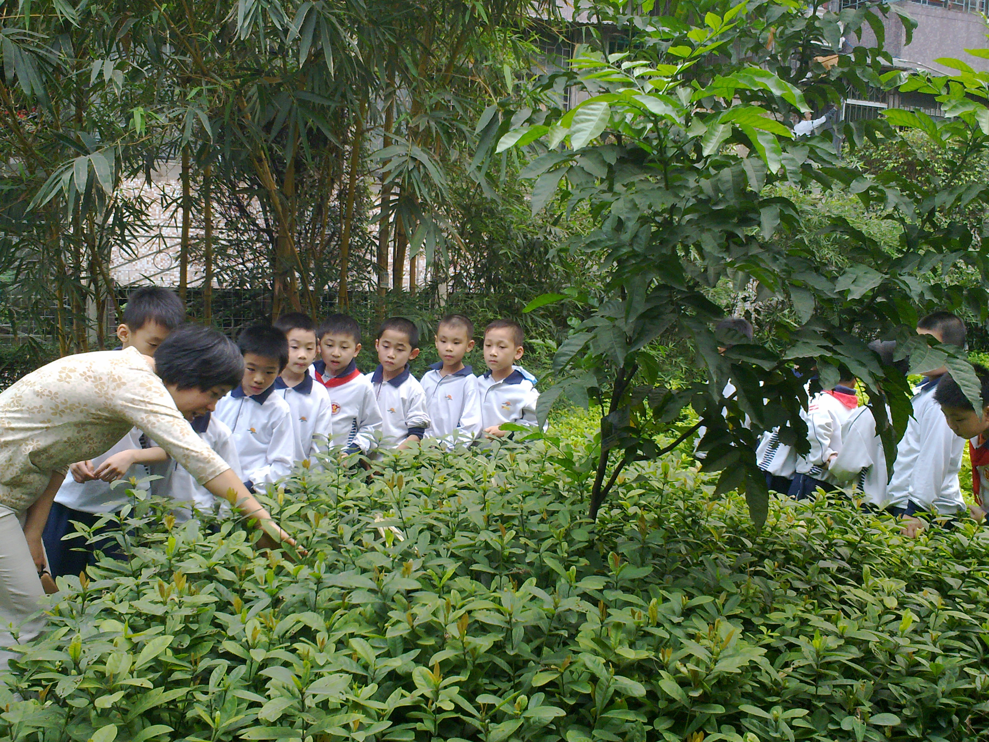 School children in a garden with their teacher